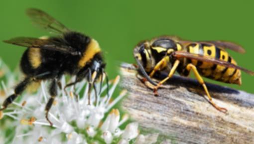 bijen en wespen 350x200.png